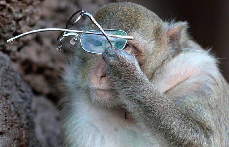 Как работает копирайтер - и при чём тут обезьяна и очки