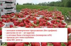 Как коммерческое предложение выстрелило благодаря В. В. Путину